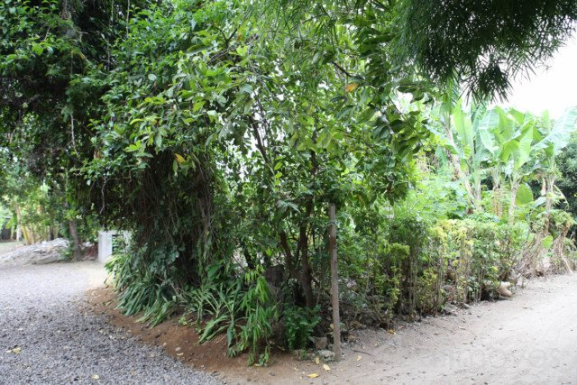 500m2 - 1500m2 Land for Lease in Sanur